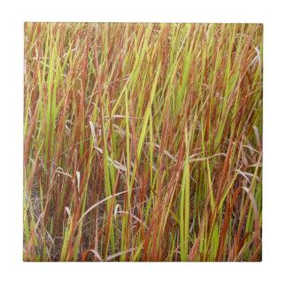 Planta de la Florida del fondo de los sawgrass de  Azulejo Cuadrado Pequeño