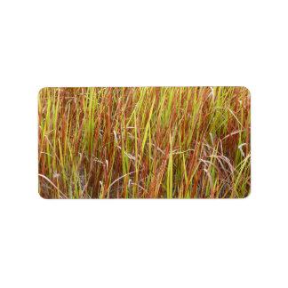 Planta de la Florida del fondo de los sawgrass de  Etiquetas De Dirección