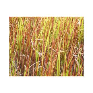 Planta de la Florida del fondo de los sawgrass de  Lona Estirada Galerías