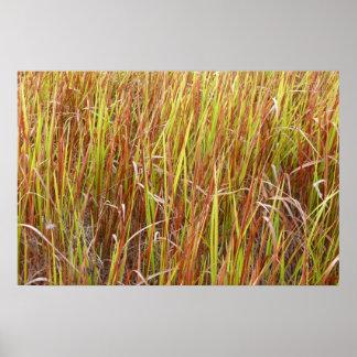 Planta de la Florida del fondo de los sawgrass de  Póster