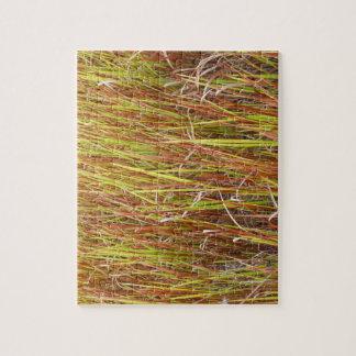 Planta de la Florida del fondo de los sawgrass de  Puzzle