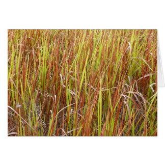 Planta de la Florida del fondo de los sawgrass de Felicitaciones