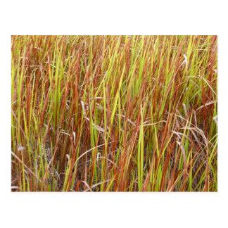 Planta de la Florida del fondo de los sawgrass de Tarjeta Postal