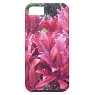 Planta de la licencia del Ti de Hawaii iPhone 5 Carcasa