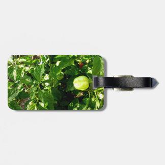 planta de la pimienta con una pimienta verde etiqueta para equipaje