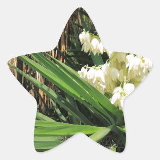 Planta de la yuca de las flores blancas pegatina en forma de estrella