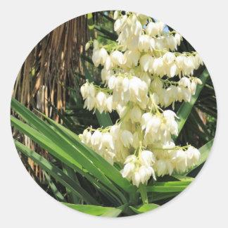 Planta de la yuca de las flores blancas pegatina redonda