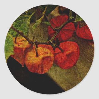 Planta de linterna china con la fruta pegatina redonda