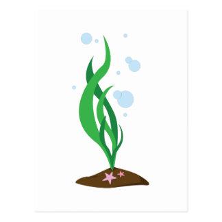 Planta de mar burbujeante tarjeta postal