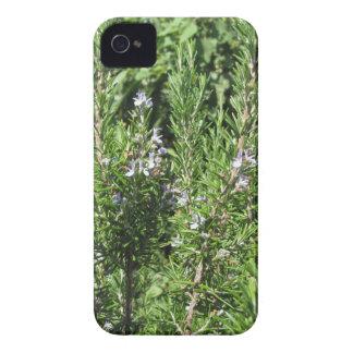 Planta de Rosemary Carcasa Para iPhone 4