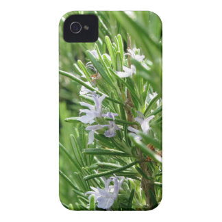 Planta de Rosemary con las flores Carcasa Para iPhone 4 De Case-Mate