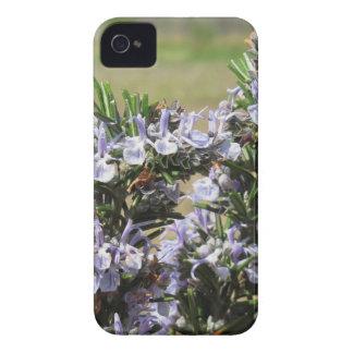 Planta de Rosemary con las flores Funda Para iPhone 4 De Case-Mate