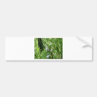Planta de Rosemary con las flores Pegatina Para Auto