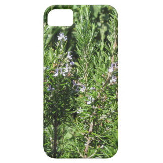 Planta de Rosemary Funda Para iPhone SE/5/5s