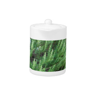 Planta de Rosemary