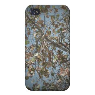 Planta de Seagrape, estilo de la cámara del agujer iPhone 4/4S Carcasas