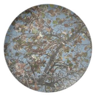 Planta de Seagrape, estilo de la cámara del agujer Platos Para Fiestas