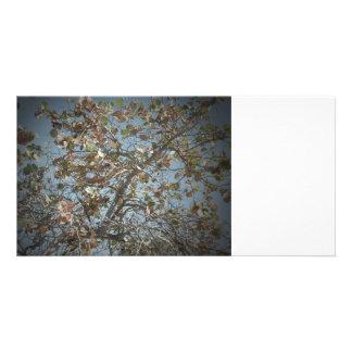 Planta de Seagrape, estilo de la cámara del agujer Tarjetas Fotográficas Personalizadas