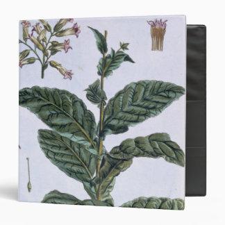 Planta de tabaco, placa 7, de la 'colección Precie