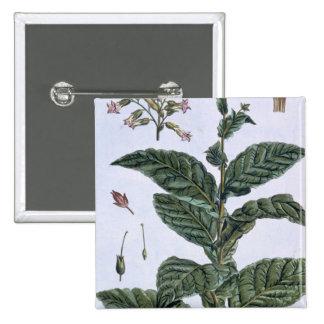 Planta de tabaco, placa 7, de la 'colección Precie Pin Cuadrado