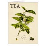 Planta de té del vintage tarjeton