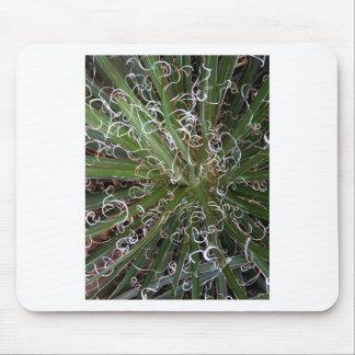 Planta del agavo en la naturaleza tapetes de raton
