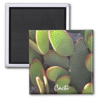 Planta del cactus imán cuadrado