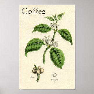 Planta del café del vintage póster