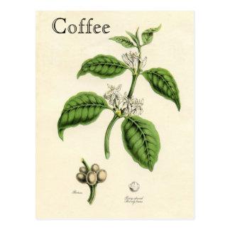 Planta del café del vintage tarjeta postal