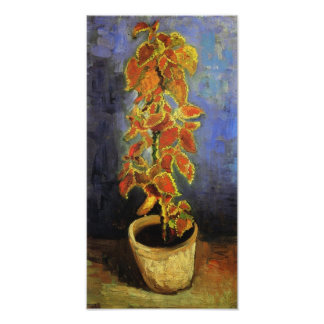 Planta del coleo de Van Gogh en una maceta Posters