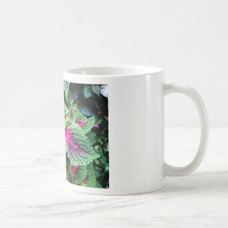 Planta del coleo en la taza blanca agradable