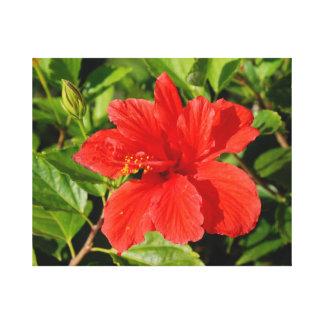 Planta del hibisco lona envuelta para galerías
