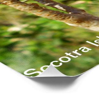 planta en la isla de socotra póster