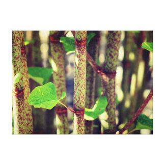 Planta exótica