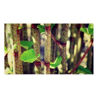 Planta exótica tarjetas de visita