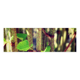 Planta exótica tarjetas de visita mini