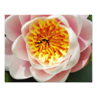 """Planta/flor nenufar hermosas invitación 4.25"""" x 5.5"""""""