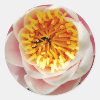 Planta/flor nenufar hermosas pegatina redonda