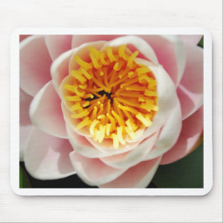 Planta/flor nenufar hermosas tapete de ratón