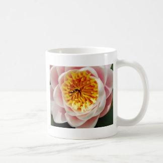 Planta/flor nenufar hermosas taza básica blanca