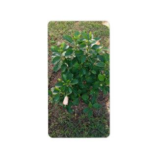 Planta floreciente del hibisco con las flores rosa etiquetas de dirección