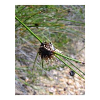 Planta floreciente del spikey tarjeton