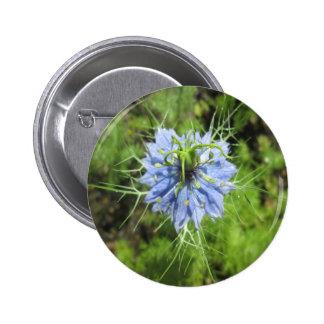 Planta floreciente del verde azul de Nigella Pin