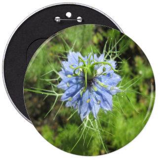 Planta floreciente del verde azul de Nigella