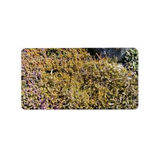 Planta floreciente púrpura en un paisaje rocoso etiqueta de dirección
