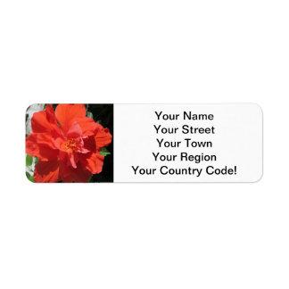 Planta floreciente roja del hibisco etiqueta de remite