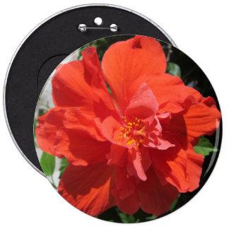 Planta floreciente roja del hibisco pin redondo 15 cm