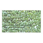 Planta fresca del helecho en jardín tarjeta de visita