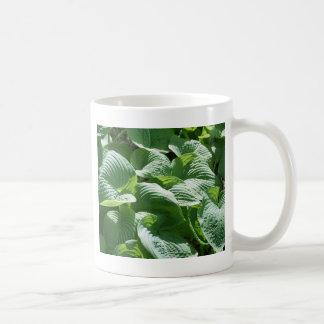 planta frondosa verde grande taza básica blanca