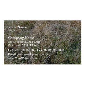 Planta frondosa verde que crece en la pared tarjeta de visita